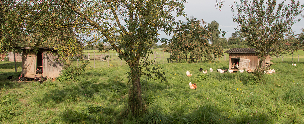 Geflügel vom Bauernhof
