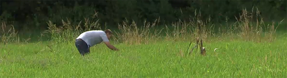 Reisfeld mit Grünpflanzen