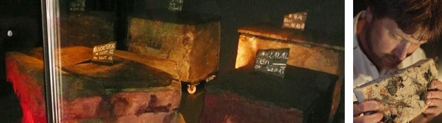 Neusetzer Rückenspeck im Basalt gereift